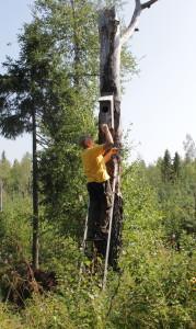 Knipor häckar i skogsmark