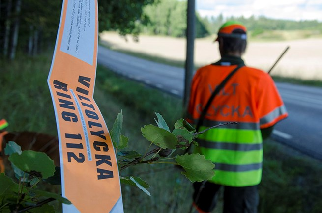 Kraftig okning av viltolyckor under augusti
