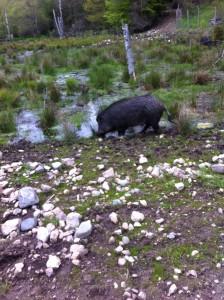 Foto från kurs i vildsvinsförvaltning i Agusa.