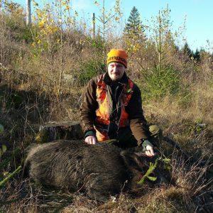 Vildsvinsgalt sköts under lördagens jakt.