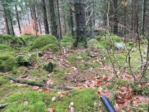 På anda sidan kullen blev också jägaren lurad av räven som gick i gryt.