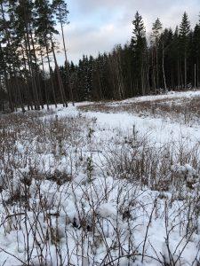 Hundskall och drev hördes men på detta pass vinklade drevdjuret i granskogen vid vattendraget och lurade även jägarna i Harsjömåla.